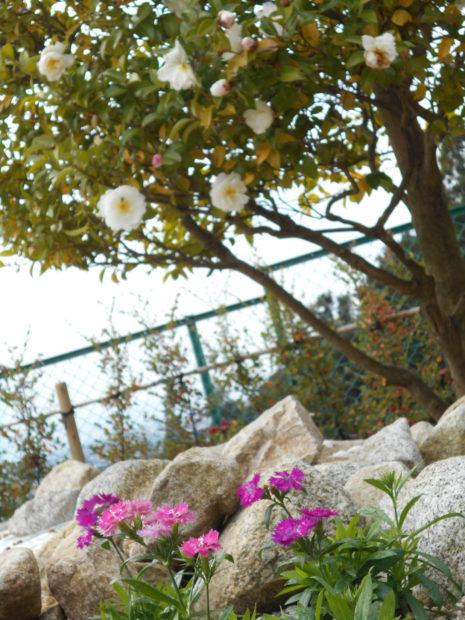 花と山茶花